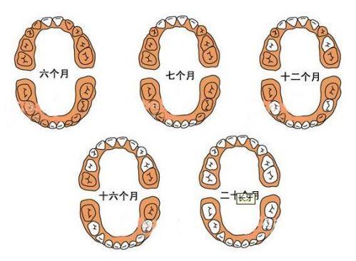 孩子幾歲開始長牙齒?